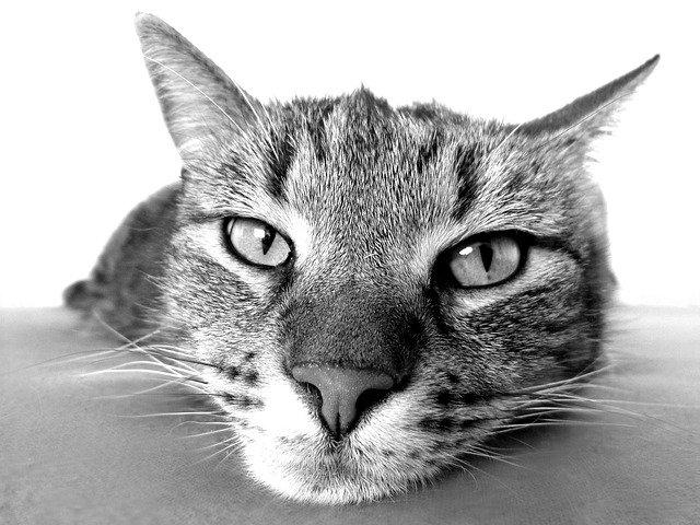 Prečo mačka kýcha