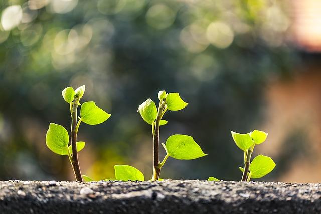 Tri mladé zelené rastlinky.jpg