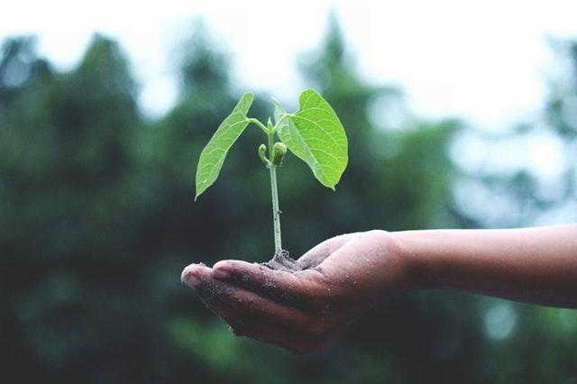 Človek drží v dlani priesadu rastliny.jpg